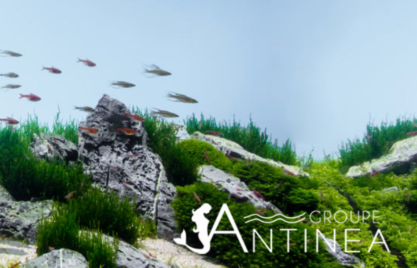 Groupe Antinéa